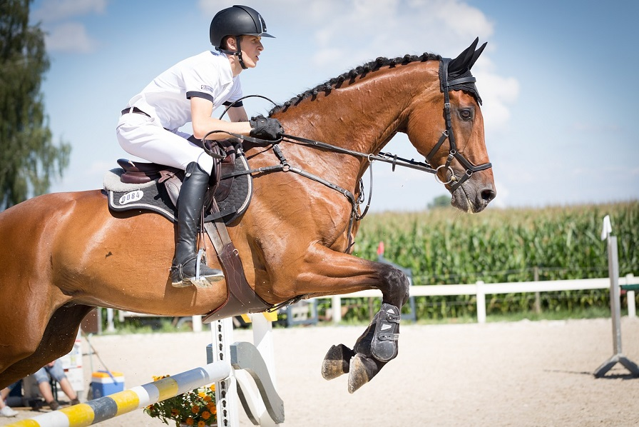 State Expects Economic Boost from Tryon Center's Winning Bid for 2018 World Equestrian Games